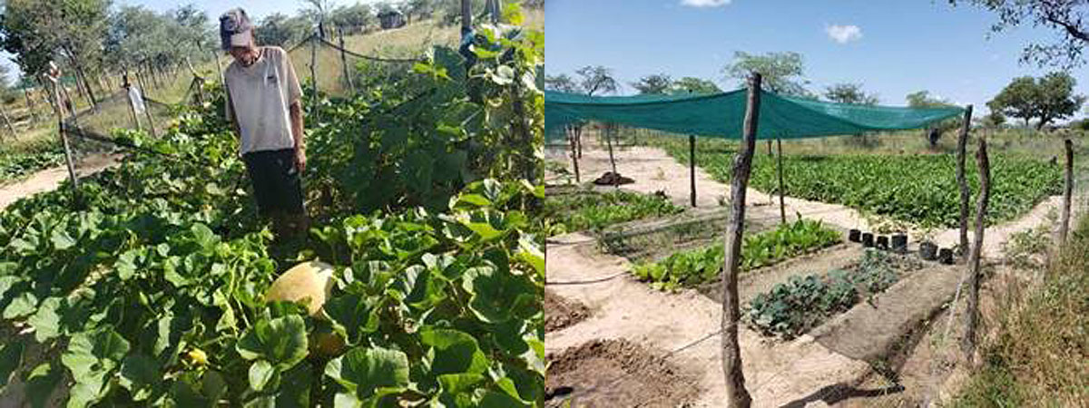 The gardening project has come to fruition in the Nyae Nyae Conservancy